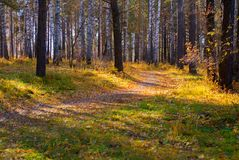 Curved walking path in wild autumn forest. Relax season scene Royalty Free Stock Image