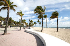 Curved wall and blowing palm trees on Fort Lauderdale Beach Royalty Free Stock Photos