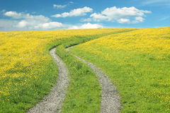 Curved way in a buttercup meadow against blue sky with clouds Stock Photos
