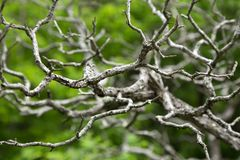 Dry tree twisting branches on a green background. Abstract natural texture. stock photo