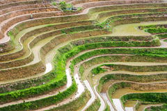 Curves of terraced rice field in Longji, China. Curves of terraced rice field in Longji, Guilin area, Guangxi China stock photos