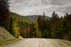 Curviing Dirt Road Stock Photography