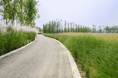 Curving asphalt road in bulrushes on sunny summer day Stock Photography
