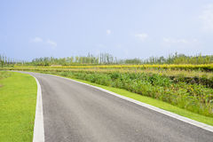 Curving asphalt road in colorful summer green on sunny day Stock Photography