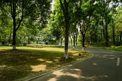 Curving asphalt road in shady woods on sunny summer day Stock Photography