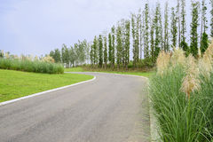 Curving asphalt road in summer plants on cloudy day Stock Photo