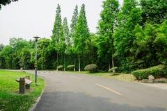 Curving asphalt road in verdant summer Stock Photo