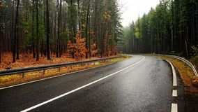 Autumn road. A curving autumn road through a pine forest on a rainy day royalty free stock images