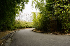 Curving black road in shady bamboo on sunny spring day Royalty Free Stock Photography