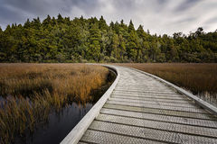 Curving boardwalk Stock Photography