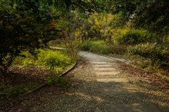 Curving cobble path on up-slope in plants of sunny winter afternoon. Curving cobblestone paved path on the up-slope in plants and trees of sunny winter afternoon royalty free stock photo