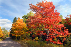 Curving Country Michigan Lane. Vivid red maple tree stands besides curving, dirt lane in rural area of the Keweenaw Peninsula, Michigan royalty free stock images