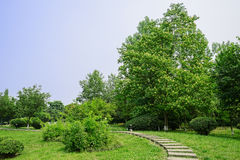 Curving flagstone path on grassy lawn in sunny summer Stock Photos