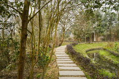 Curving flagstone pavement along stream in early spring Royalty Free Stock Image