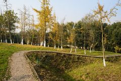 Curving hillside path in plants of sunny winter morning. Chengdu,China stock photography