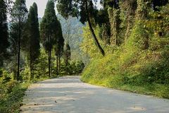 Curving mountainside road and plants in warm winter sunlight Royalty Free Stock Image