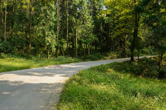 Curving mountainside road in shady woods on sunny day Royalty Free Stock Photos