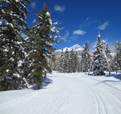 Curving nordic ski trail and Engineer mountain peak Royalty Free Stock Photography
