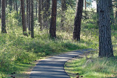 Curving Path Into the Forest with Dappled Sunshine Stock Photography