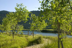 Curving Path by a Lake. Path turns left by Wonderland Lake near Boulder, Colorado, with small cottonwood trees and a fence Stock Photos