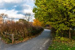 Rustic Autumn Trail with Fence in Lincoln Park Chicago royalty free stock image