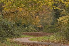 An autumn pathway on Southampton Common royalty free stock photo