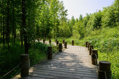 Curving planked pavement in woods of sunny summer. Chongzhou,Sichuan Prov.,China royalty free stock images