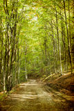 Curving road in autumn forest Stock Photos