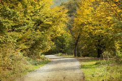 Curving road in autumn forest Stock Photo
