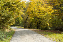 Curving road in autumn forest Stock Photography
