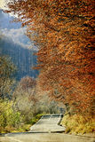 Curving road in autumn forest Royalty Free Stock Image