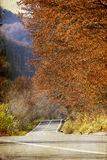Curving road in autumn forest Stock Images
