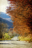 Curving road in autumn forest Royalty Free Stock Photo