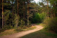 Curving road in forest in evening Royalty Free Stock Photo