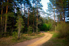 Curving road in forest in evening Stock Image