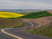Curving road through wheat fields on rolling hills Royalty Free Stock Photography