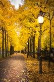 Curving Sidewalk Beautiful Yellow Orange Autumn Leaves Illuminat Stock Photo