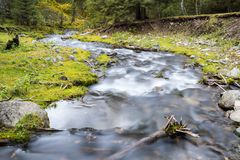Curving stream in forest. Beautiful nature landscape royalty free stock photos