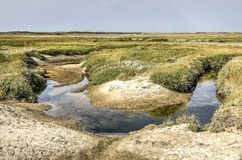 Curving tidal creek. Tidal creek curving through a landscape with patches of sand and fields of salt tolerant wildflowers in the Slufter nature reserve on the royalty free stock photo