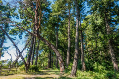 Curving Tree stock photography