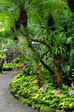 Curving Tropical Garden Royalty Free Stock Image