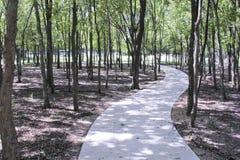 Curvy Bürgersteigsweg durch Bäume Lizenzfreie Stockfotos