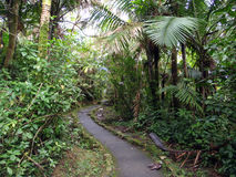 Curvy bana i tropisk skog arkivbild