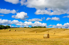 Curvy barley field with straw bales and blue cloudy sky Stock Photo