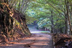 Curvy country road Royalty Free Stock Image