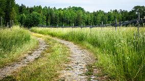 Curvy forest road. Beautiful picture of a curvy forest road that cut through paddocks and meadows with tall grass and wildflowers. Sweden stock image