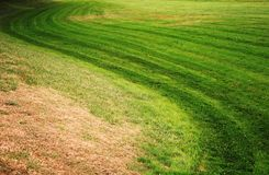 Curvy grass Stock Images