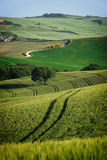 Curvy lines in Tuscany Stock Images