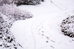 Curvy path covered by snow in UK winter Royalty Free Stock Photo