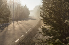 Curvy pedestrian lane with man silhouette on fog morning Stock Photos